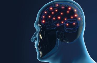 Jornadas de neurociencias sistémicas